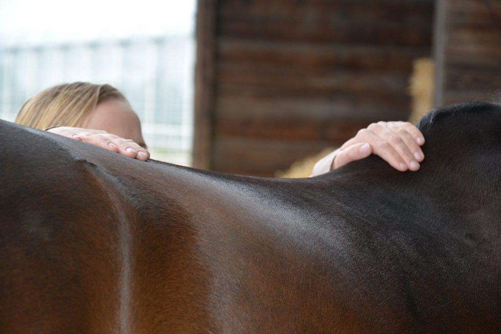 Osteopatische behandeling_Osteopathie voor paard_paard is kreupel_paard is stijf_biomechanica paard_anatomie paard_visceraal paard_neurologie paard_paard laten behandelen_lecher-antenne_holistische behandeling paard_manuele therapie paard_rijtechnische problemen_hormonale problemen_gedragsproblemen_SJ Osteopathie_Sandy Jansen