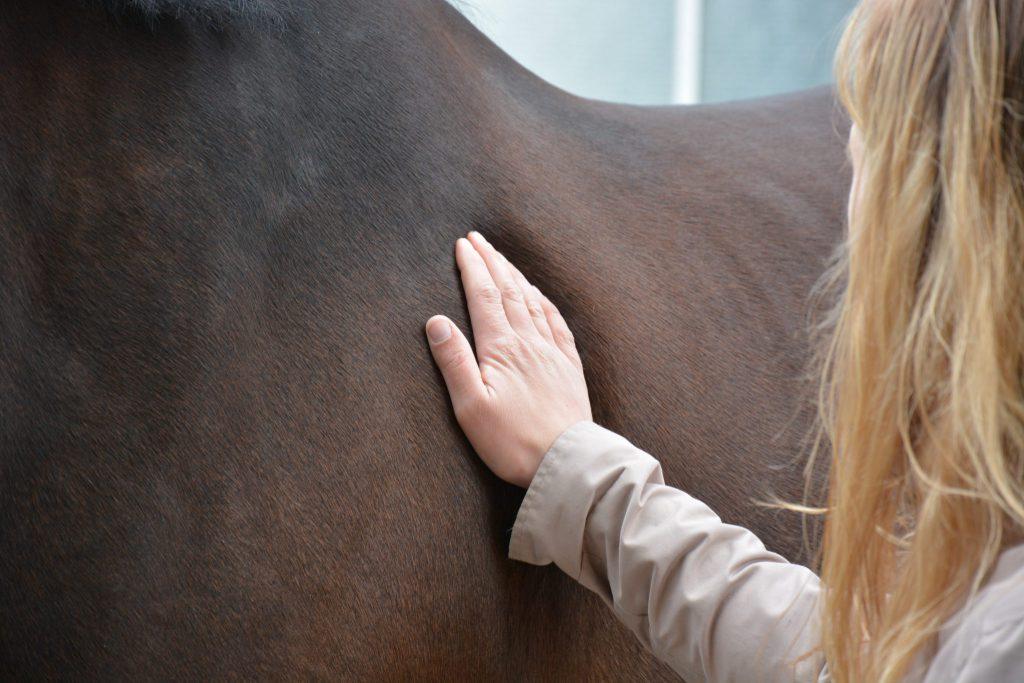 alternatieve behandeling bij paarden_Osteopathie voor paard_paard is kreupel_paard is stijf_biomechanica paard_anatomie paard_visceraal paard_neurologie paard_paard laten behandelen_lecher-antenne_holistische behandeling paard_manuele therapie paard_rijtechnische problemen_hormonale problemen_gedragsproblemen_SJ Osteopathie_Sandy Jansen