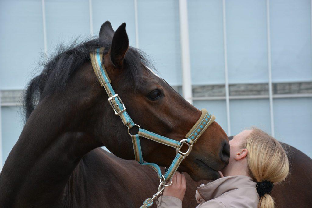 Osteopaat_Osteopathie voor paard_paard is kreupel_paard is stijf_biomechanica paard_anatomie paard_visceraal paard_neurologie paard_paard laten behandelen_lecher-antenne_holistische behandeling paard_manuele therapie paard_rijtechnische problemen_hormonale problemen_gedragsproblemen_SJ Osteopathie_Sandy Jansen