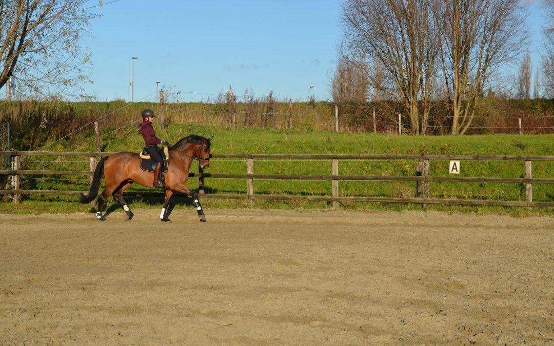 Het trainen van een paard (Deel I)