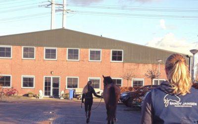 Help mijn paard is kreupel?!