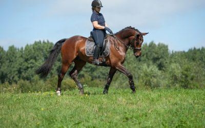 Romp stabiliteit bij paarden