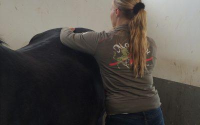SI problemen bij paarden
