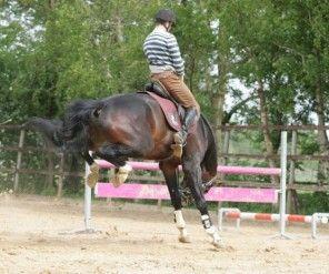 Het trainen van een paard (Deel III)