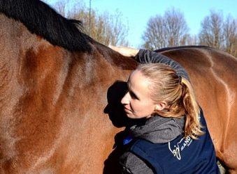 Osteopaat voor paarden