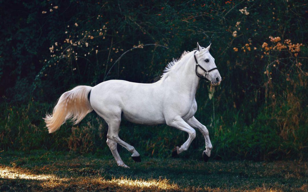 Gezonde darmen, gezond paard!