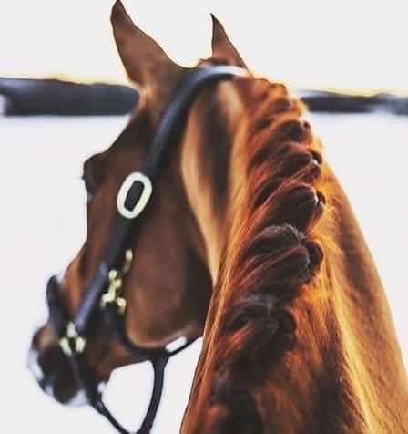 Het trainen van een paard (Deel II)