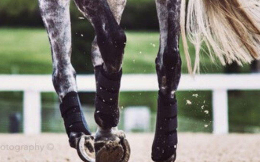 Peesblessures bij paarden