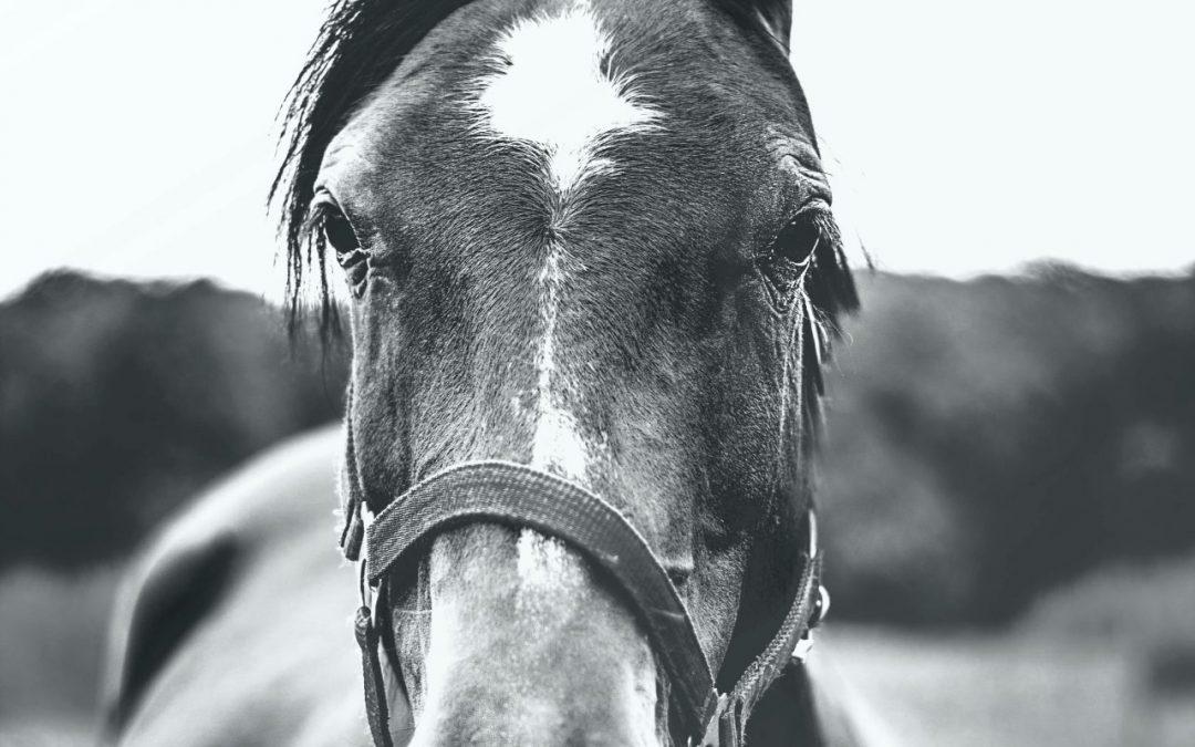 Het lymfestelsel van je paard