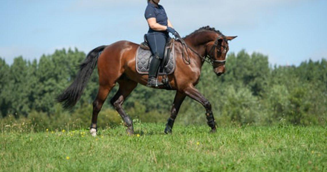 Rompstabiliteit paard osteopaat