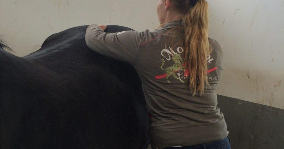 Si-problemen paard- osteopaat