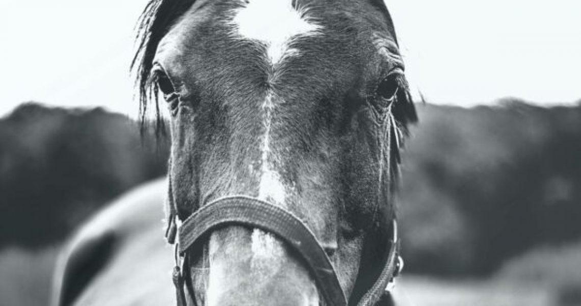 lymfestelsel paard osteopathie